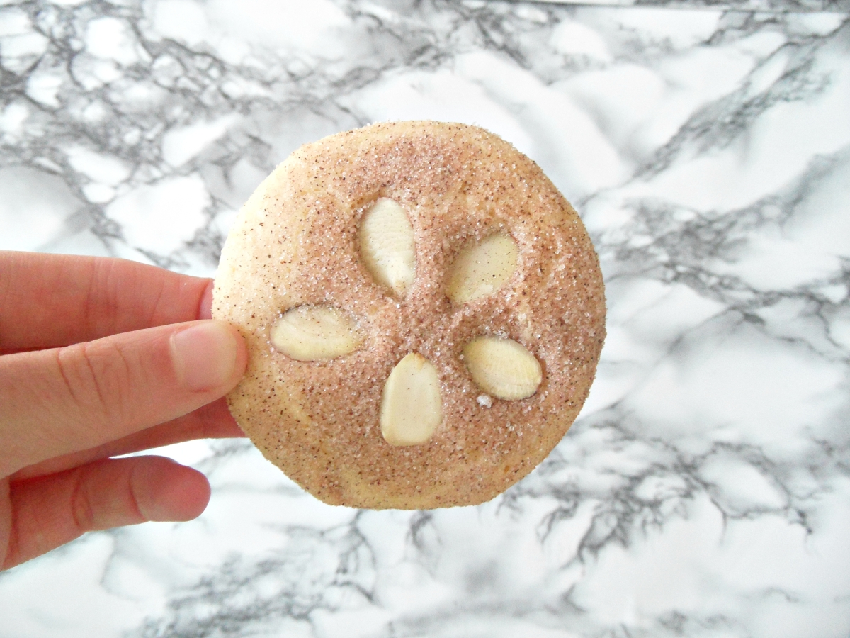 Fun Sand Dollar Cookies